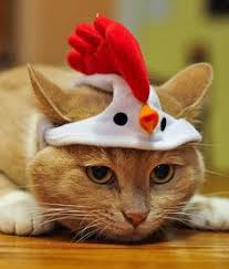 Image result for easter kittens and chickens