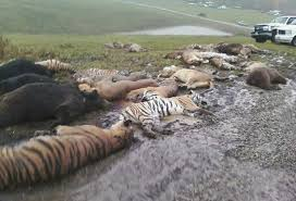 protect endangered species essay  don t hesitate to order a  dangerous animals petsblogspotcom