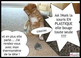 """Résultat de recherche d'images pour """"photo de chat qui parle"""""""