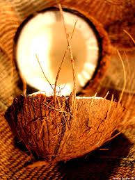 Afbeeldingsresultaat voor vruchtvlees van de koko