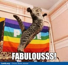 Funny Happy Birthday Cat Meme & Grumpy Cat | Why Are You Stupid? via Relatably.com