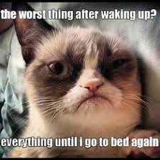Cats =^..^= Grumpy Cat on Pinterest | Grumpy Cat, Grumpy Cat Meme ... via Relatably.com