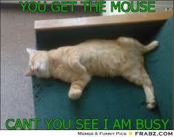 Lazy Cat Meme Generator - Captionator Caption Generator - Frabz via Relatably.com