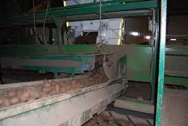 mcdonald s oacute w ocenia nieco po ywienia innovator i russet burbank to dwie odmiany ziemniakoacutew wykorzystywane do produkcji frytek dla mcdonald s przez ffp farm frites posiadaj261