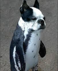 Grrr le pingouin barbare !!  Images?q=tbn:ANd9GcS4b5vEbHseLrWeF-kHjPoeyHbbMlrJQSQP7PTZkTvtwVuoVPku
