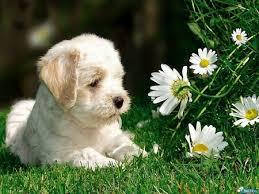 Πώς είναι η μύτη ενός εμπύρετου σκύλου;