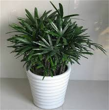 office christmas gift 30 pcs palm bamboo seeds indoor plants new arrival diy home garden bonsai cheap office plants