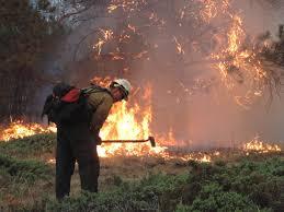 got what it takes wildland fire summer job opportunities wildland firefighter