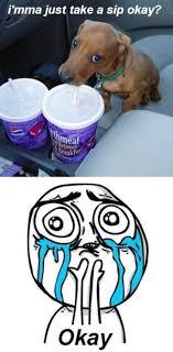 Cuteness Overload | Know Your Meme via Relatably.com
