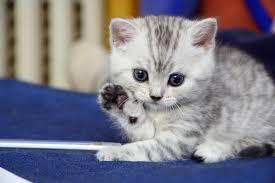 قطط صغيرة صور قطط حلوة
