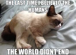 Funny-Grumpy-Cat-Memes-13.jpg via Relatably.com