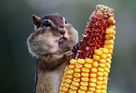 curiosidades de alimentación animal