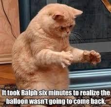 Funniest-cat-memes-of-all-time-5.jpg via Relatably.com