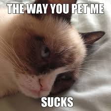 Top 49 Most Funniest Grumpy Cat Quotes | Just Laughs Fun and Humor via Relatably.com
