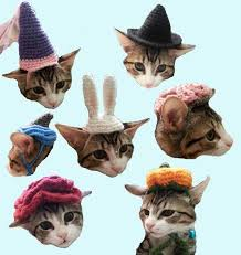 7 Cat Hat <b>Patterns Halloween Costume</b> Brain <b>Pumpkin Witch</b> ...