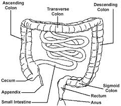 colon diagram large intestine