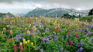 BBC - Earth - The abominable mystery: How flowers conquered the ...