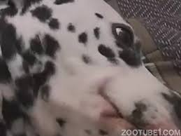 Longest Videos / Page 9 / Zoo Tube 1