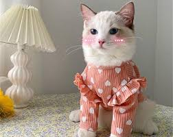 Related <b>to cat</b> clothes