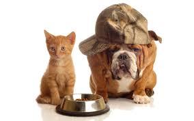 منذ متى و القطط تتصالح مع الكلاب؟ Images?q=tbn:ANd9GcS6NgXqMcdZ2hEi-CZGmDlIWQfrGW28aMO-eexgbELZWnHxw8SF