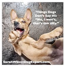 Dog Memes: Things Dogs Don't Say via Relatably.com