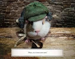 a pig oliver twist alex goodwin charles dickens tess a pig oliver twist alex goodwin charles dickens tess newall 9781408881262 com books