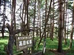 「名勝・高田松原」の画像検索結果