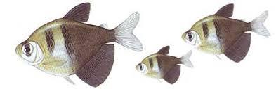 Resultado de imagem para imagens de receitas de peixes SAICANGA