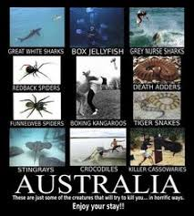 Spiders and Australian animals on Pinterest | Australian Spider ... via Relatably.com