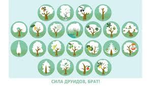 dom-expert.by - Какое <b>растение</b> по мнению друидов вы...