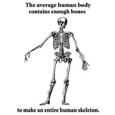 Human Body Contains Enough Bones To Make A Human Skeleton ... via Relatably.com