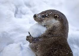 Top Ten Animals That <b>Love</b> the <b>Snow</b> | Earth Rangers: Where kids ...