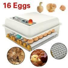 Птица <b>инкубаторы</b> - огромный выбор по лучшим ценам | eBay
