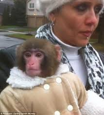 Image result for ikea monkey
