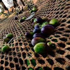 <b>Сетка для сбора урожая</b> - Все производители в области ...
