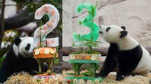 Moscow Zoo throws birthday party for giant <b>panda pair</b> - YouTube