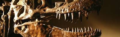 <b>Iron</b> Key to Preserving <b>Dinosaur</b> Soft Tissue | Answers in Genesis