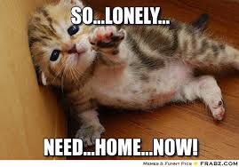 So...lonely...... - Helpless Kitten Meme Generator Captionator via Relatably.com