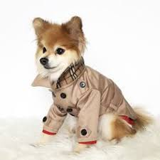 <b>2015 New</b> High Quality <b>Dog</b> Jacket Designer Warm Printed Winter ...