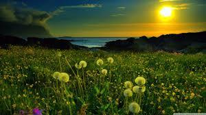 البوم من الطبيعة images?q=tbn:ANd9GcS
