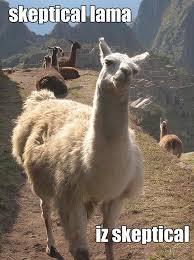 skeptical-llama-meme.jpg via Relatably.com