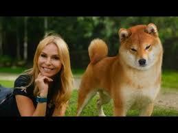 THE <b>SHIBA INU</b> - THE SCREAMING DOG OF JAPAN - 柴犬 - YouTube