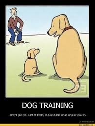 Positive K9 Training - Videos - Google+ via Relatably.com