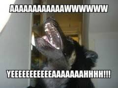 Dog Memes | WeKnowMemes via Relatably.com