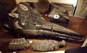 Risultati immagini per Lyme regis Philpot Museum immagini