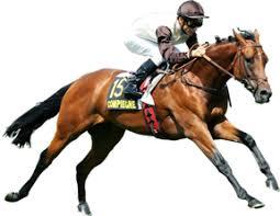 """Résultat de recherche d'images pour """"image d' hippodrome de chevaux de course"""""""