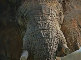 giants club we must unite to fight the elephant poachers and we giants club we must unite to fight the elephant poachers and we must win the independent