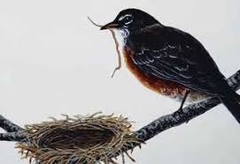 Image result for Images for birds building a nest