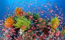 Images & Illustrations of barrier reef