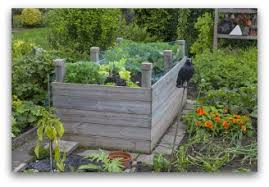 Small Picture Raised Bed Vegetable Garden Layout Ideas